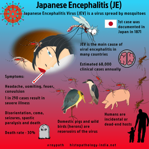 Japanese Encephalitis Is A Viral Disease Transmitted By Mosquitoes